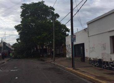 El daño ambiental que dejó el temporal: miles de árboles caídos