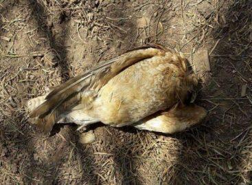 Sanagasta. ¿Agroquímicos causaron mortandad de animales?
