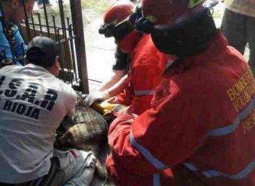 Bomberos debieron rescatar a un perro callejero atacascado