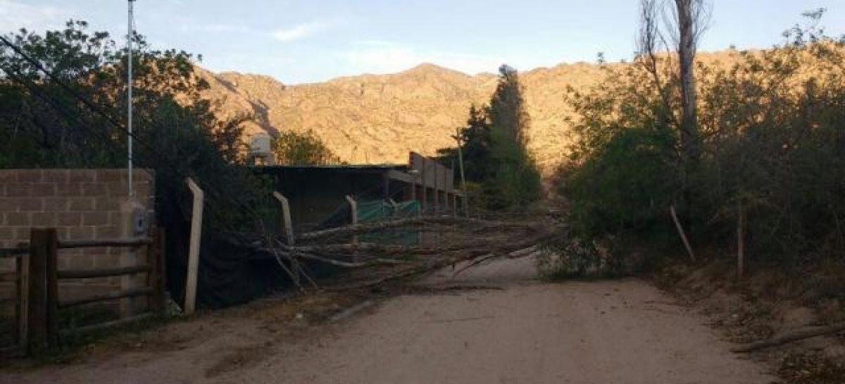 Calor, tierra, árboles caídos y cortes de luz: lo que dejó el zonda