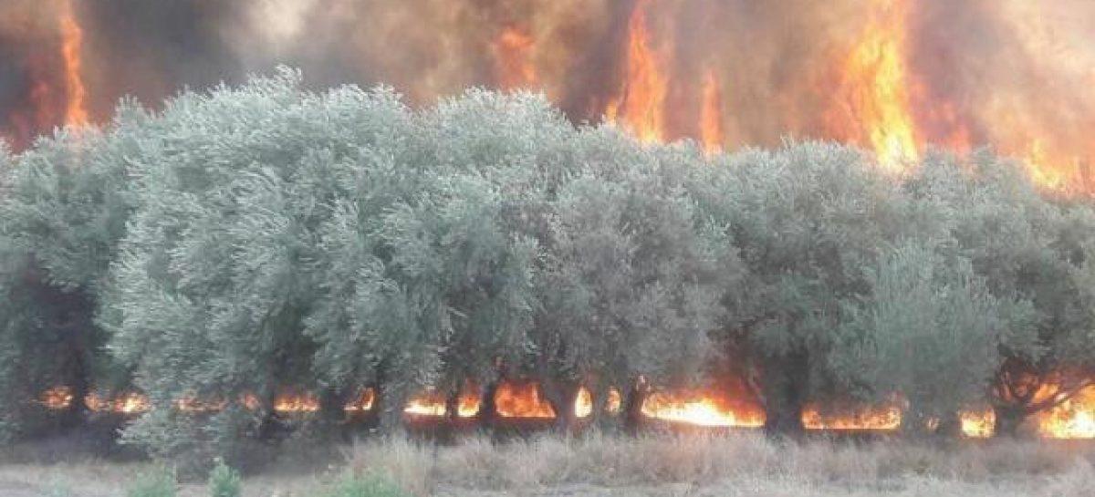 Ruta 38. Fue controlado el incendio que arrasó con 380 hectáreas
