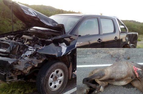 Intendente sufrió un grave accidente al embestir un caballo