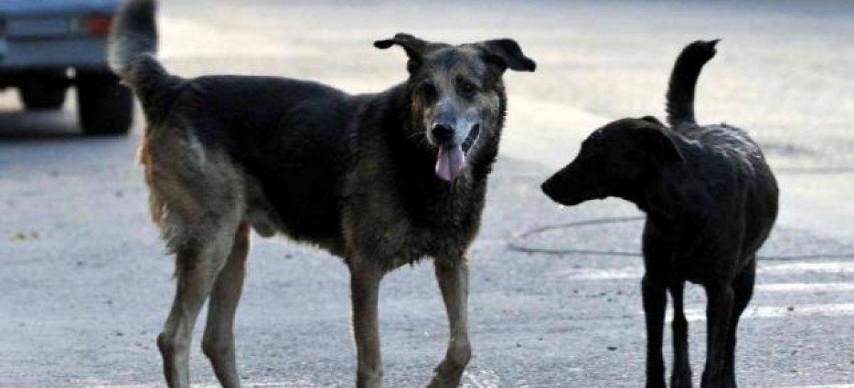 Capital. En dos años se triplicó el número de perros callejeros