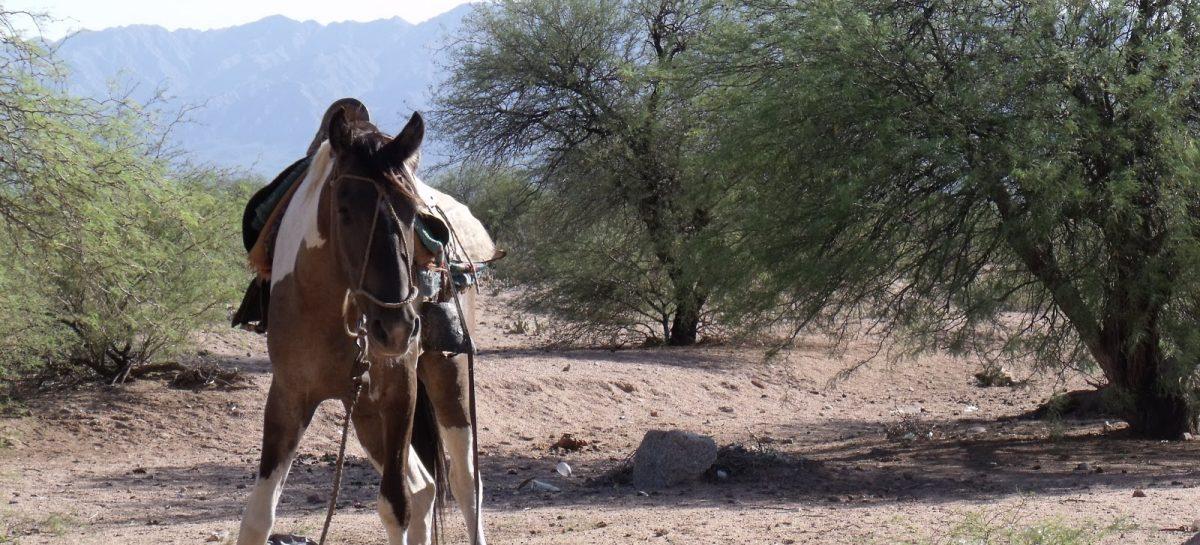 Tiene 9 años y pelea por su vida tras caer de un caballo