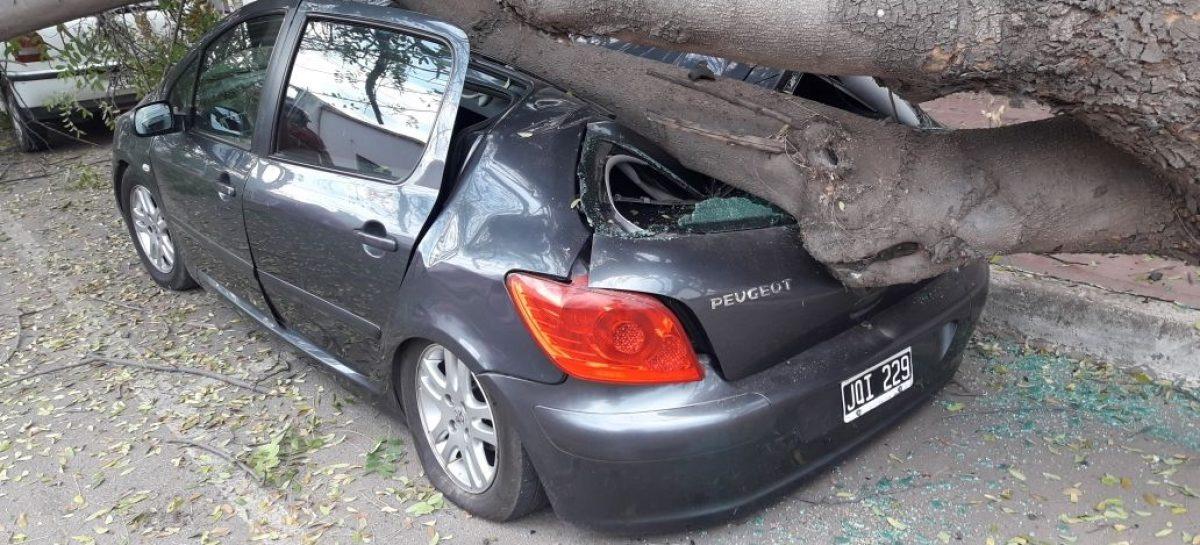 Un árbol de gran porte cayó y destruyó un auto