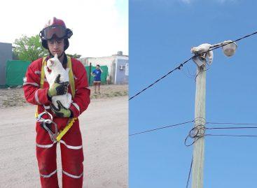 Bomberos salvaron a un gato de lo alto de un poste de luz
