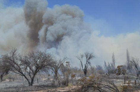 Varias fincas fueron arrasadas por el fuego en Pagancillo
