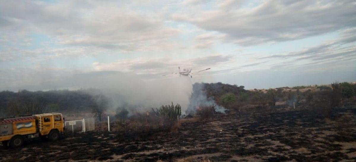 Controlan incendio forestal en inmediaciones del Parque de la Ciudad