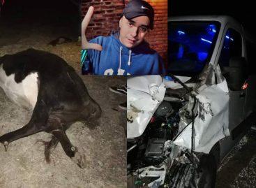 Tras cantar en La Rioja, se accidentó el Dipy: chocó una vaca
