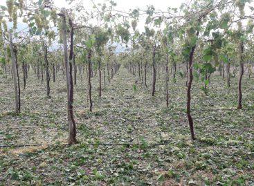 El granizo volvió a golpear con dureza al agro riojano