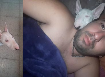 Le entraron a robar y se llevaron hasta la perra: pide ayuda para recuperarla