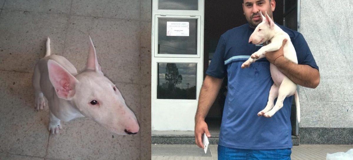 Le robaron su perra, se viralizó el hecho y 'Alaska' está de vuelta