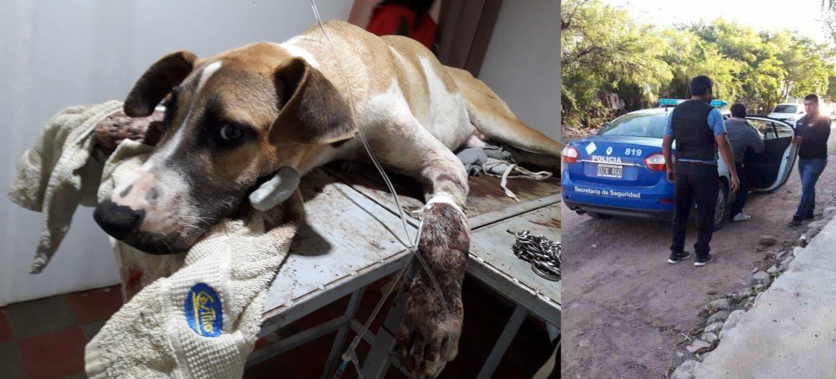 Murió el perro baleado en Olta: un detenido por crueldad animal
