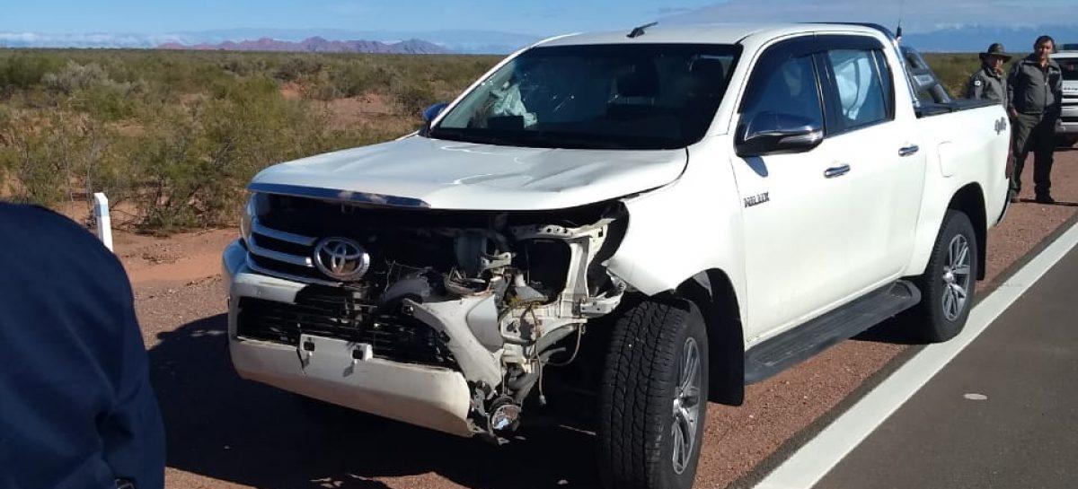 Funcionario sufrió accidente tras embestir guanaco en ruta 76