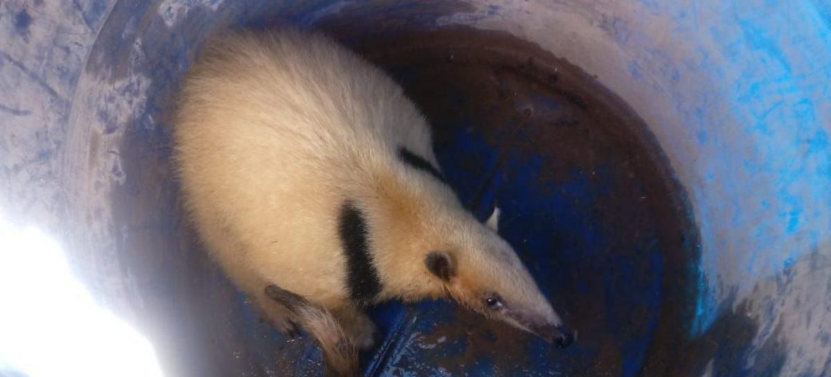 Hallaron un oso melero en una vivienda de Chepes
