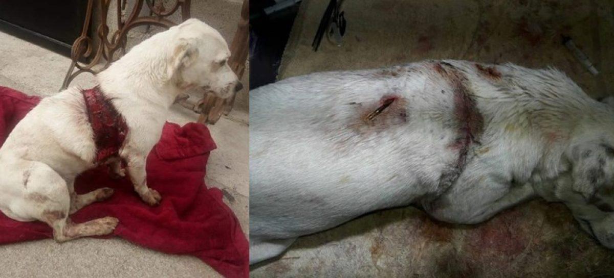 Indignación nacional por atroz caso de crueldad animal