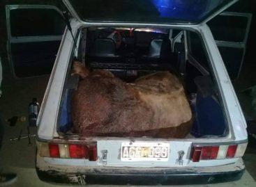 Insólito. Mataron una vaca y la robaban en un Fiat 147: fueron detenidos
