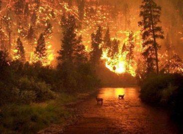 Se quema el Amazonas y hay alerta mundial