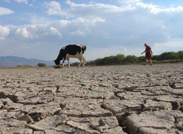 Chile enfrenta la peor sequía en más de medio siglo