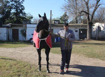 Murió 'Americano', el caballo de turf más rápido de la región