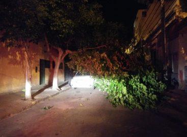 Una enorme rama cayó sobre un auto en el centro capitalino