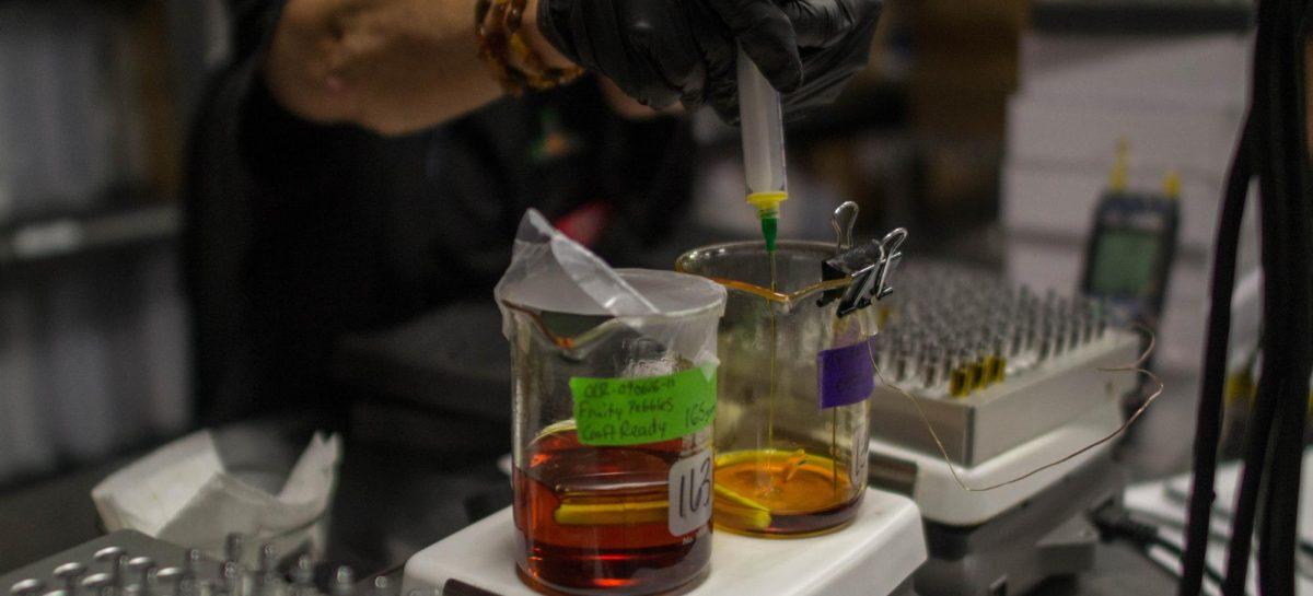 La Rioja estudia producir aceite cannabis medicinal