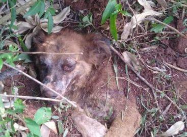 Crueldad extrema. Rescatan perro que fue enterrado vivo