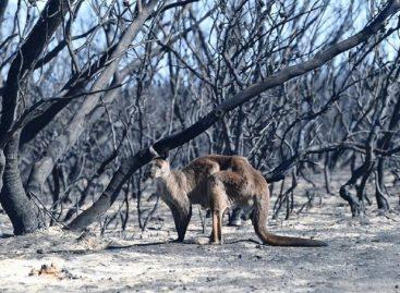 Arde Australia. Hay más de mil millones de animales muertos por los incendios