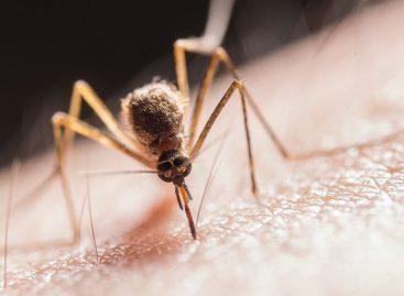 Alerta dengue. Ya llegan a 97 los casos confirmados en La Rioja