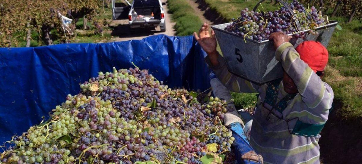 Para UATRE, los planes sociales atentan contra la cosecha