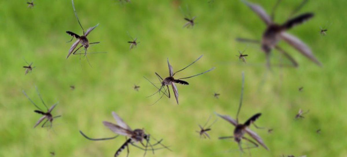Alerta dengue. Aumentan a 128 los casos confirmados en territorio riojano