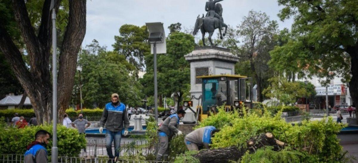 CAPITAL. EL VIENTO DEJÓ GRAVE DAÑO AMBIENTAL CON 205 ÁRBOLES CAÍDOS